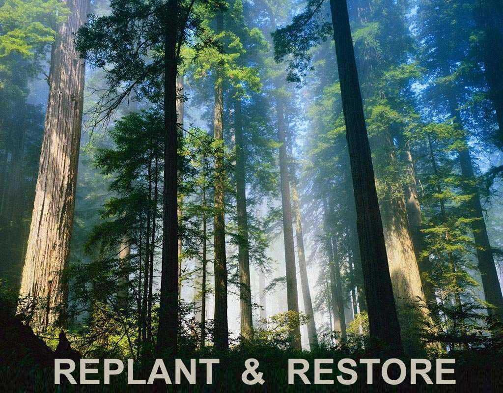 replant & restore the old forests